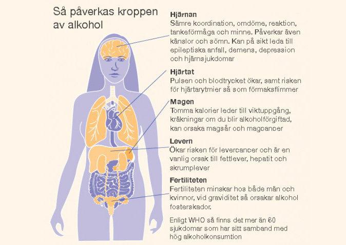 så-påverkas-kroppen-av-alkohol-520x477