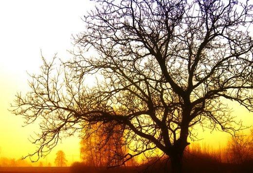 Ett träd i solnedgången.