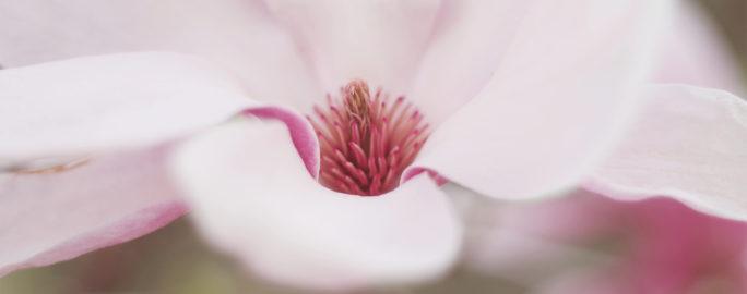 endometrios-nationella-riktlinjer