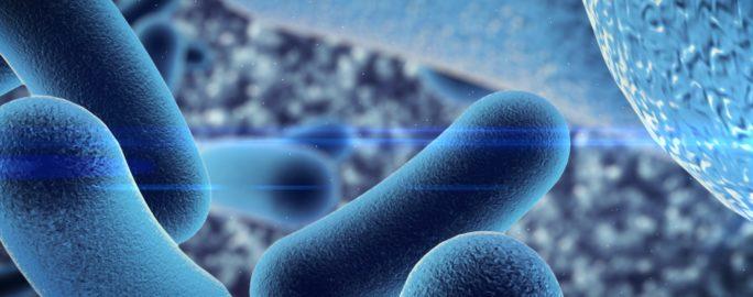 Bacteria 900