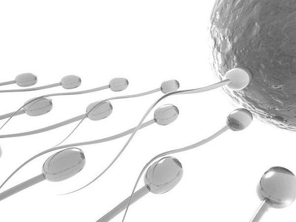 framtidens-spermier