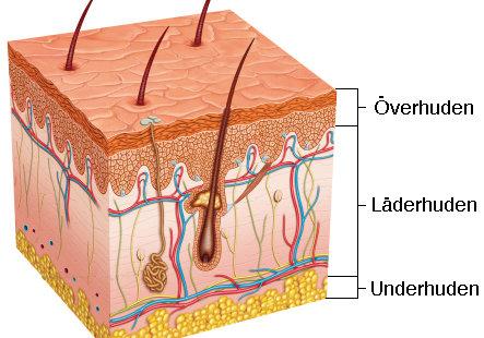 hudslipning