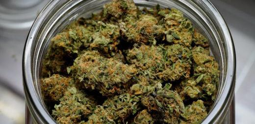 En burk med torkad cannabis som kommer användas för att behandla patienter med epilepsi.