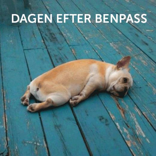 En hund ligger trött på ett golv.
