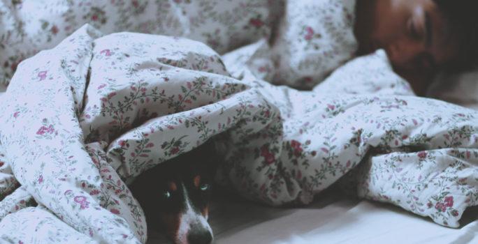 Man med sömnapné sover i säng bredvid vaken hund.
