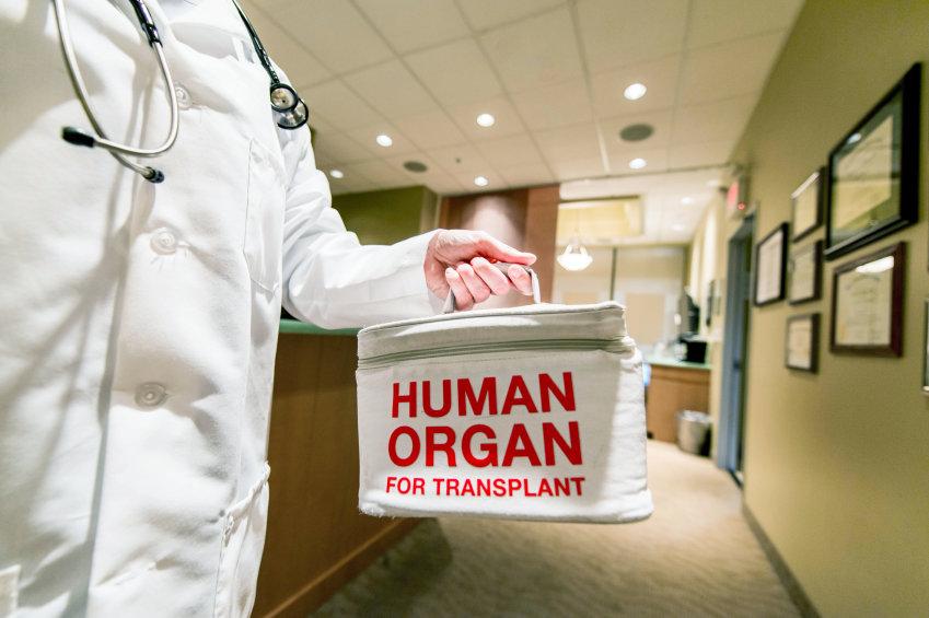 Organ för transplantation