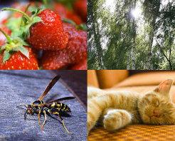 olika allergier