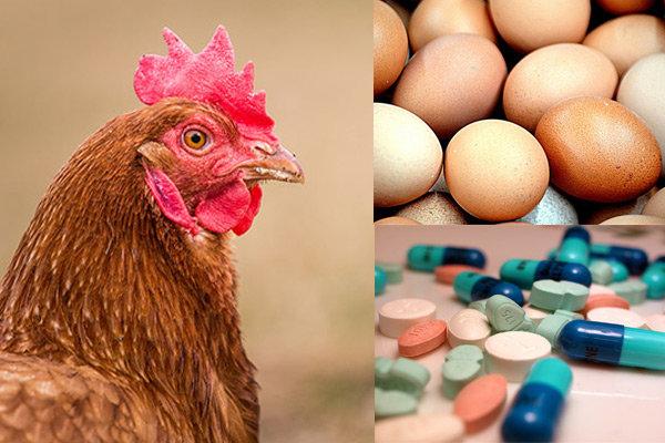 höna, ägg, piller