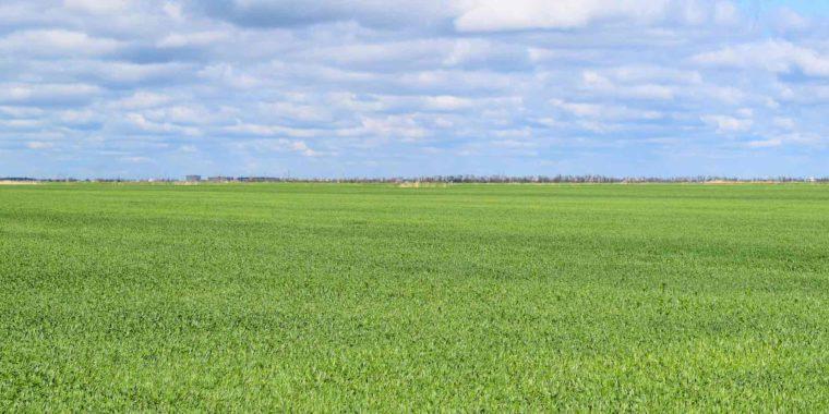 Grönt fält med molnig himmel