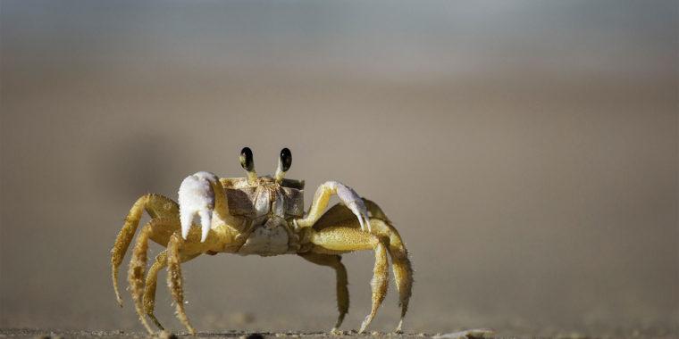 Cancer kan symboliseras av en krabba eftersom de kan likna en växande tumör
