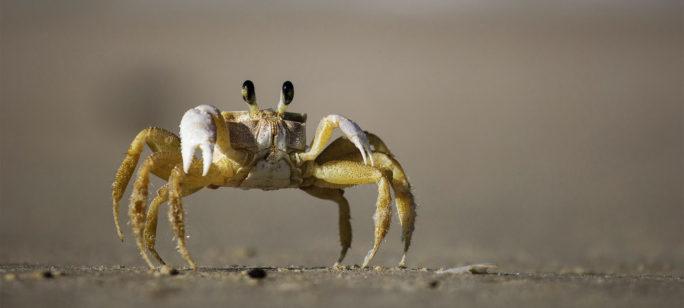 Cancer kan symboliseras av en krabba med ben och klor