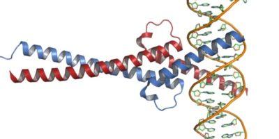 cMyc protein