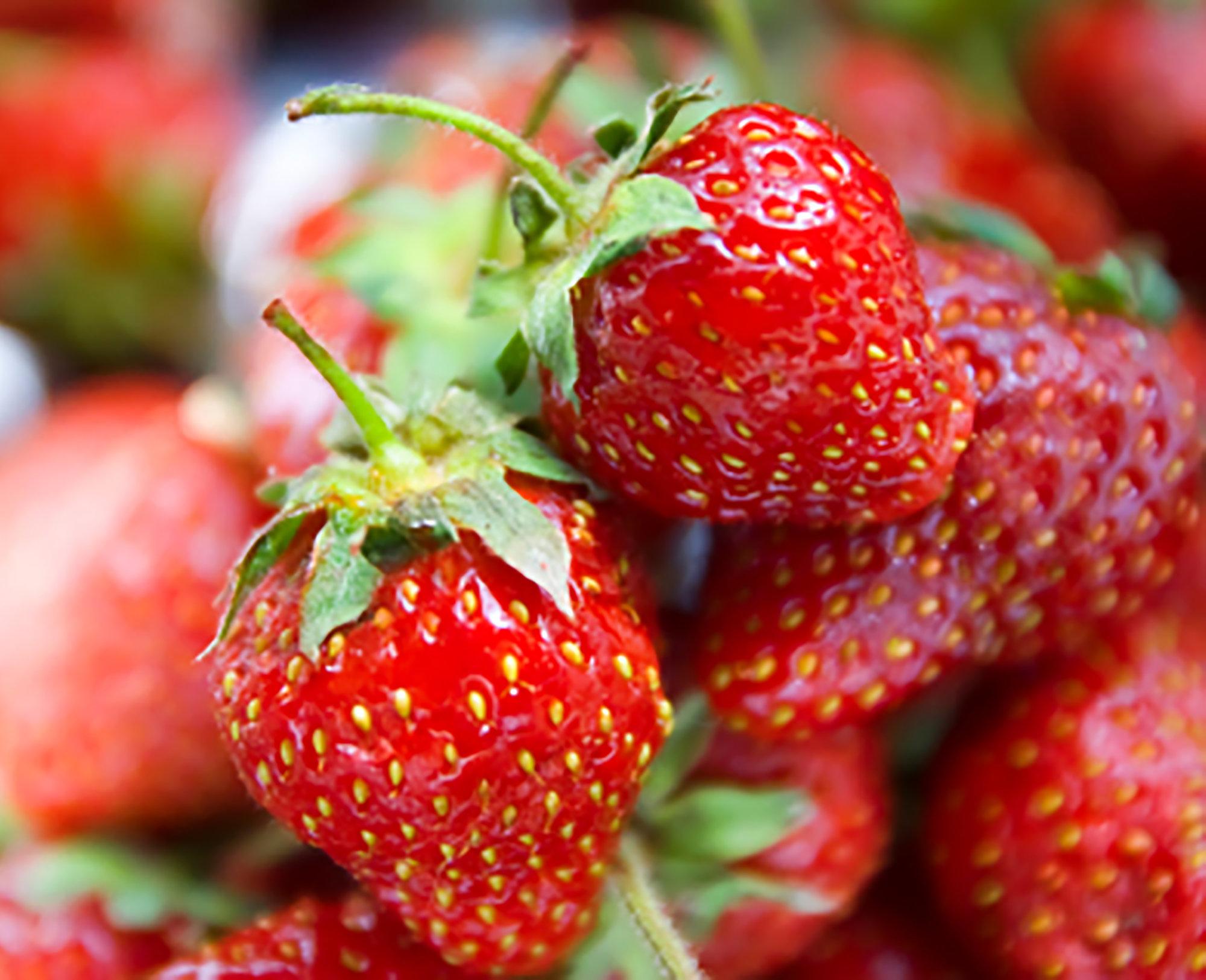 äta jordgubbar när man ammar