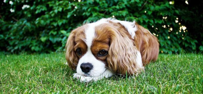 Om man är pälsdjursallergisk är det vanligt att man är allergisk mot bland annat kanin, hund och katt.