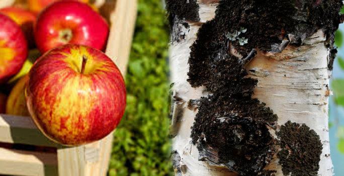 Om man är allergisk mot björkpollen är det vanligt att även bli allergisk mot stenfrukt, främst äpple och päron.