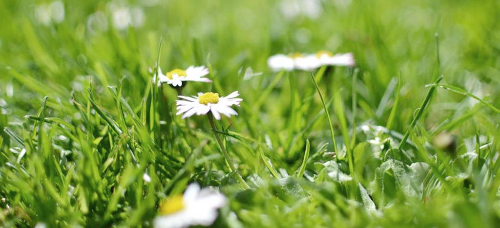 Många svenskar lider av allergi mot gräsopollen, vilket även kan utvecklas till en korsreaktion.