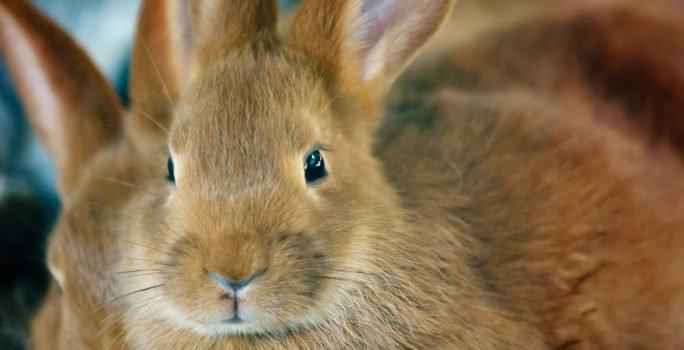 Om man är pälsdjursallergiker är det vanligt att man är allergisk mot kanin, katt och hund.