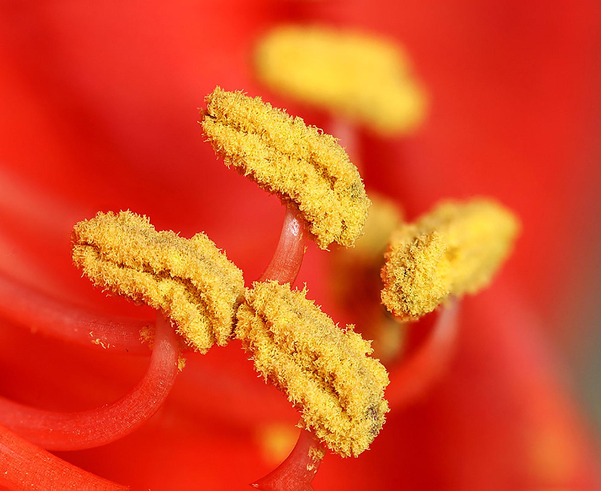kliar i halsen hosta allergi