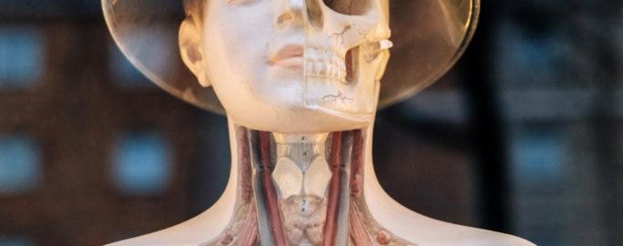 sköldkörtel symtom överfunktion