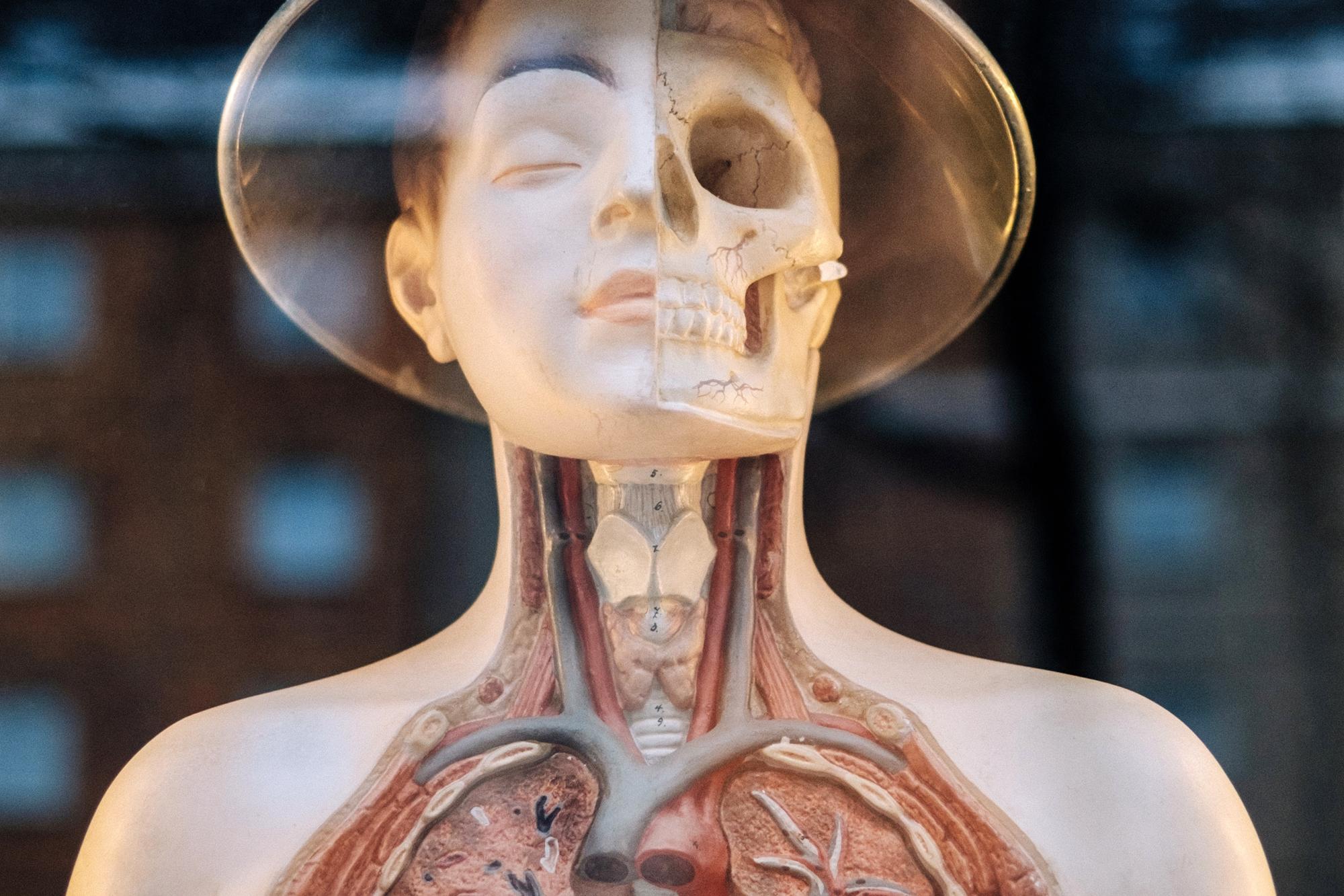 sköldkörtelns funktion i kroppen