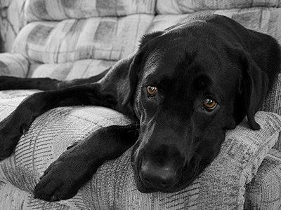 Ledsen hund