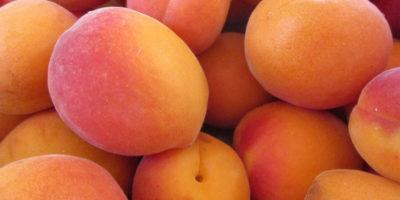 aprikoser-aminosyror